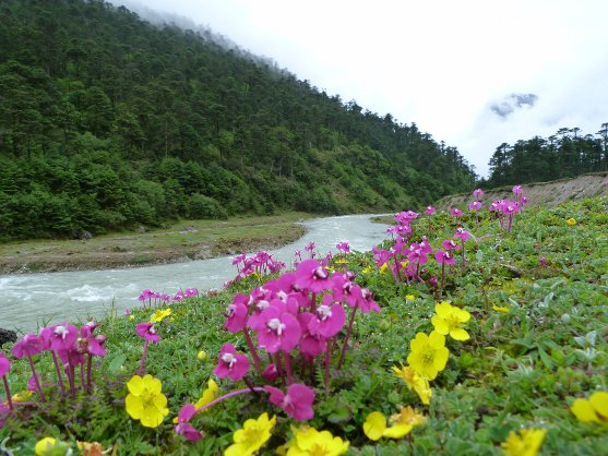 Lachung and Yumthang's Flower Valley