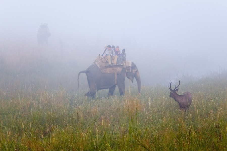 Elephant and Deer in Jim Corbet National Park