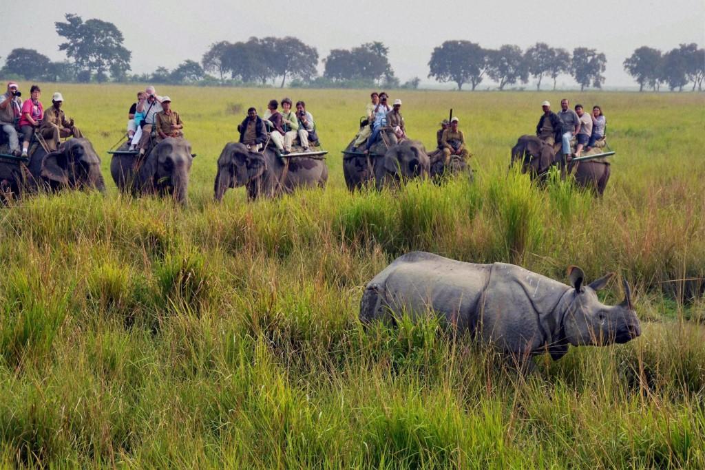 Tourists at Kaziranga National Park