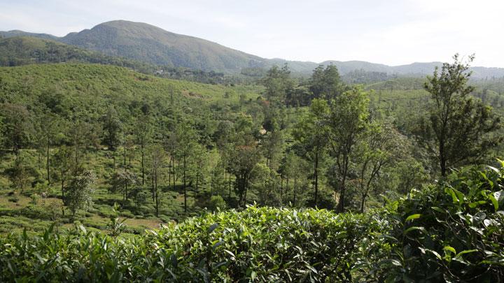 Cardamom Hills Kerala
