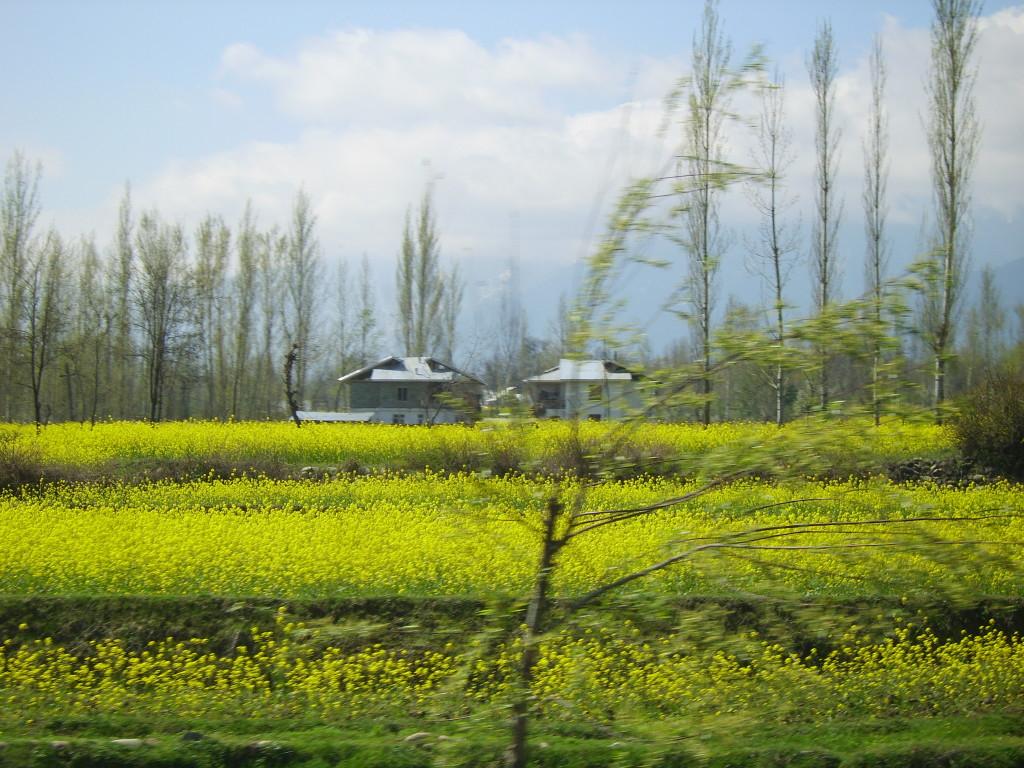 gulmerg, Kashmir