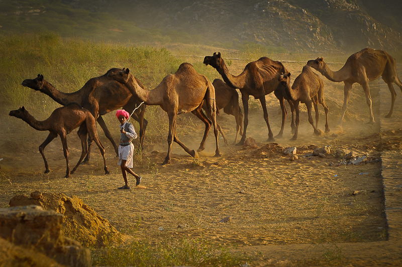 Pushkar Fair Rajasthan