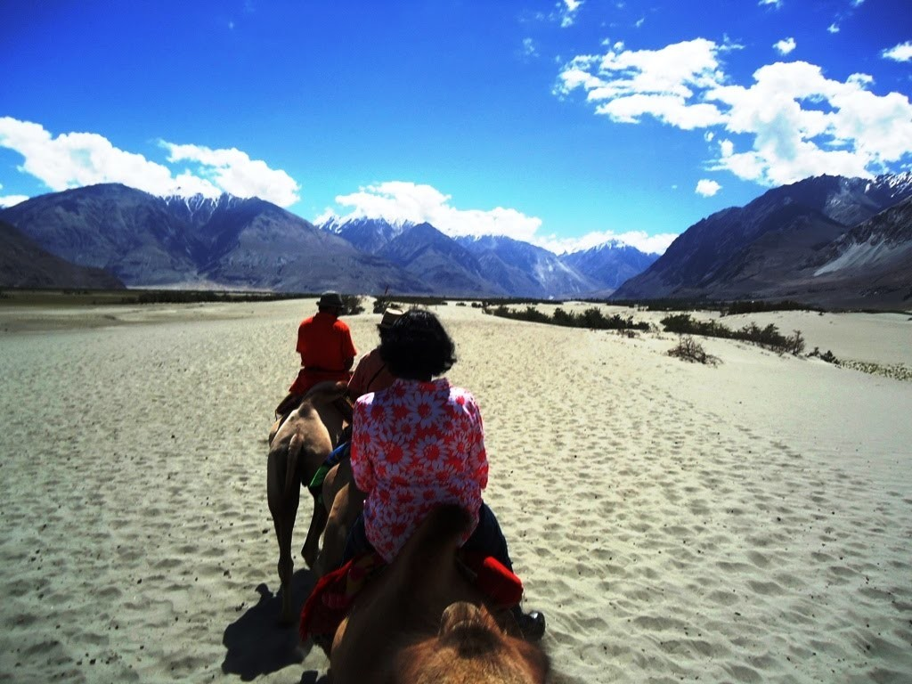 Two Humped Camel Safari At Hunder Desert In Nubra Valley, Ladakh, India