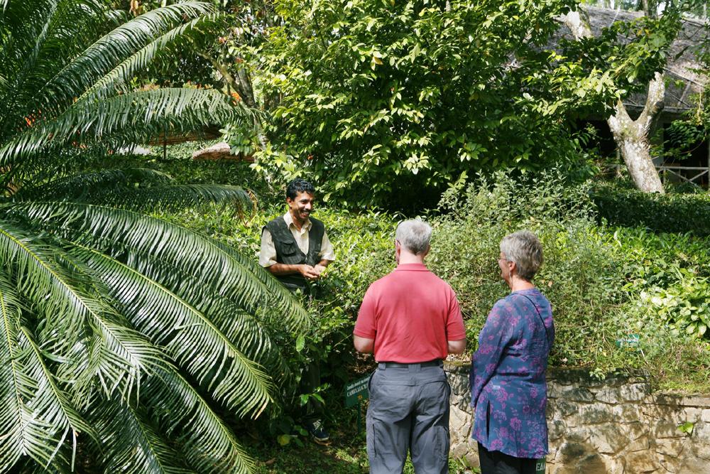Kerala spice plantation