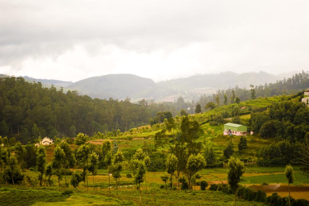 Nilgiri Hills in Kerala