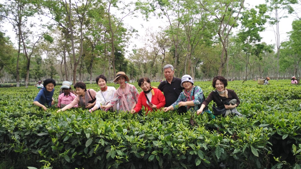 Tea Garden in North East India