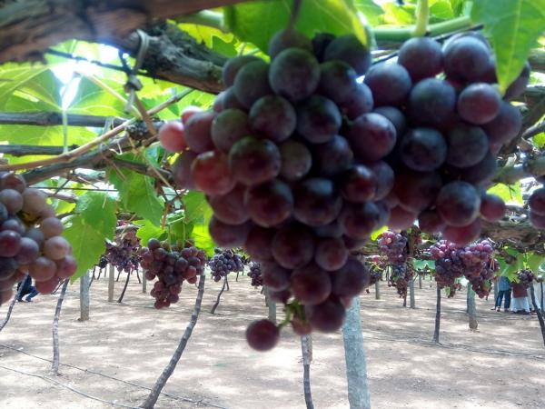 best winetours in India