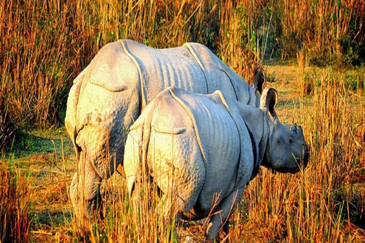 Best Places to visit in Northeast India