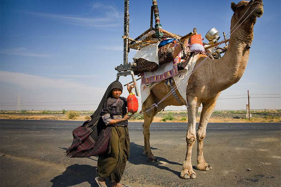 Camel Ride in Gujarat
