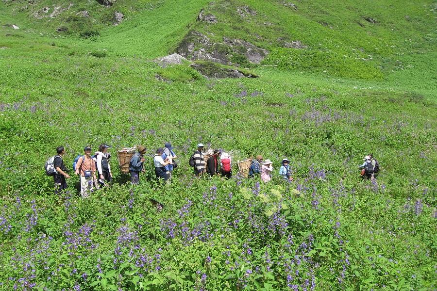 Valley of Flowers Trek, Uttarakhand