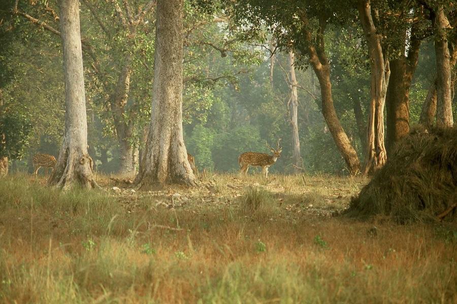 Kanha Bandhavgarh Tour