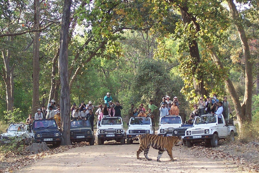 Bandhavgarh, The Home Of White Tigers