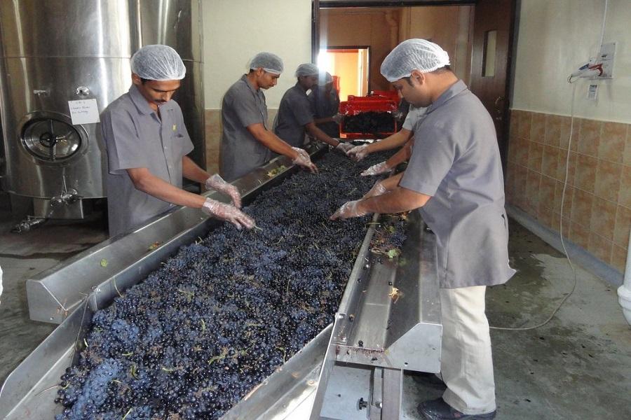 India Wine Tour