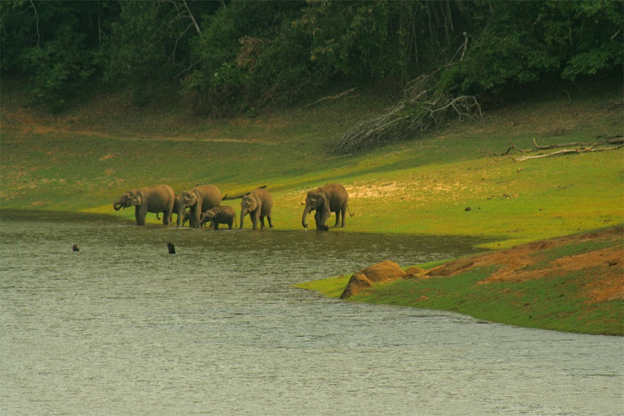Wildlife in South India